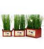 Deziworkz Rectangular Red Victorian planters/tubs (Set of 3)