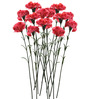 Fourwalls Pink Synthetic Artificial Carnation Stem - Set of 15