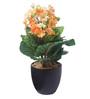 Fourwalls Multicolour Fabric Premium Range Primula Flowers with Vase