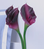 Fourwalls Purple Polyurethane Artificial Calla Lilies