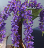 Fourwalls Purple Fabric Magnificent 5 Head Drooping Flower Bunch