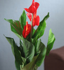 Fourwalls Red Synthetic Artificial Real-Touch Anthurium Plant