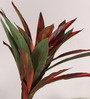 Fourwalls Green & Red Polyester Artificial Cordyline Floor Plant