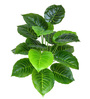 Ginni Bloom Green PVC & Synthetic Artificial Philodendron Plant