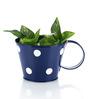 Green Girgit Blue Polka Dots Cup
