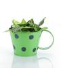 Green Girgit Green Polka Dots Cup
