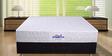 Guardian 8 Inch Thick Queen-Size Memory Foam Pocket Spring Mattress by Springtek