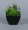 Importwala Black & Green Ceramic Artificial Succulents in Pot