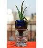 Kavi Reverse Osmosis Glass Planter