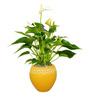 Greymode Kolam Planter Yellow
