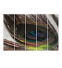 Multiple Frames Printed Peacock Feathers Art Panels like Painting - 5 Frames