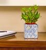 Nurturing Green 2 Layer Big Lucky Bamboo Plant In Blue Raindrop Ceramic Pot