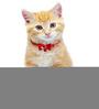 Pawzone Cat Collar Bells in Dark Pink (Set of 2)