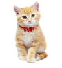 Pawzone Cat Collar Bells in Green (Set of 2)