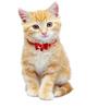 Pawzone Cat Collar Bells in Pink (Set of 1)