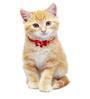 Pawzone Mickey Cat Collar Bells (Set of 1)