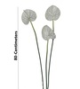 Pollination White Synthetic Anthurium Artificial Flowers - Set of 3