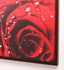 Retcomm Art Wooden 18 x 1 x 24 Inch Red Rose with Water Droplets Romantic Framed Canvas Painting