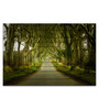 Hashtag Decor Engineered Wood 30 x 20 Inch Road Through Trees Framed Art Panel