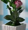 SS Silverware Multicolour Porcelain Artificial Rose Flower with White Designed Flower Pot
