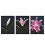 Tallenge Vinyl 36 x 0.5 x 18 Inch Triptych Flower Study Premium Quality Ready to Hang Framed Art Panels - Set of 3