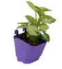 Violet Vertical Hook Pot  (Pack of 12) By Chhajed Garden