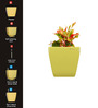 Yuccabe Italia Combo for 3 Stella (Yellow Self Watering planter)
