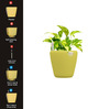 Yuccabe Italia Combo for 3 Stoic (Yellow Self Watering Planters)